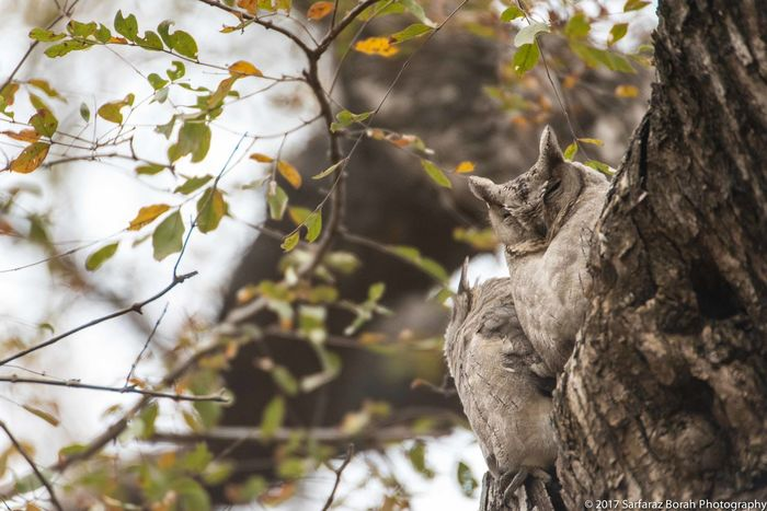 Ranthambore National Park Tree Wild Animal Wildlife & Nature Wood Birds Leaves Owlets Rajasthan Trunk