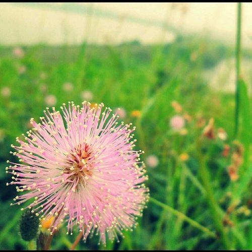 Flower at mud flow in sidoarjo. Instagallery_jatim Instameet Instameetindonesia Instagallery_indonesia kamerahpgw_surabaya kamerahpgw ------------------- @cak_soekier @plat_kz @achmadtiar @ariezki5 @aprina104 @aancivrac @ndo_highvoltage @eko_vs @ekoprayitno_dw @fikutoru @farie_adie @instagallery_jatim @instameetindonesia @metomsh @irakibo @jejaklangkah @kazupunya @lenays01 @malaikatkecil02 @mybest_macro @nurmalisafar @impossible_picture @namine_aini @nannonk @senjaahari @tonnie_s @zibix