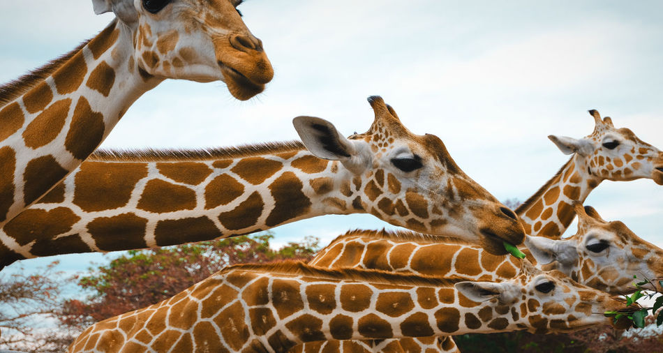 View of giraffe against sky in zoo