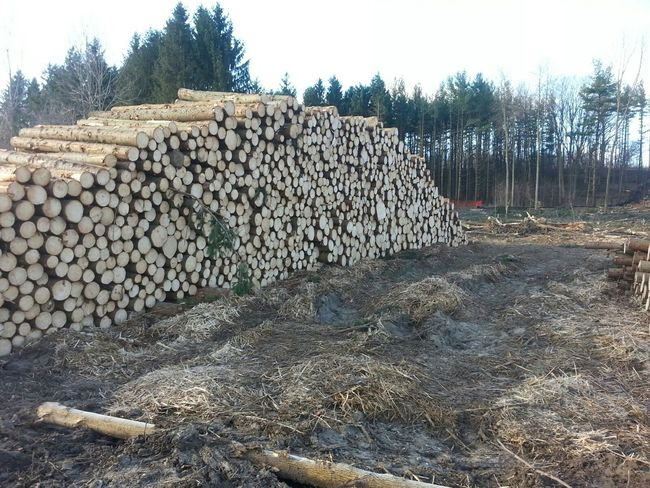 Loggingin the City Stacked Logs