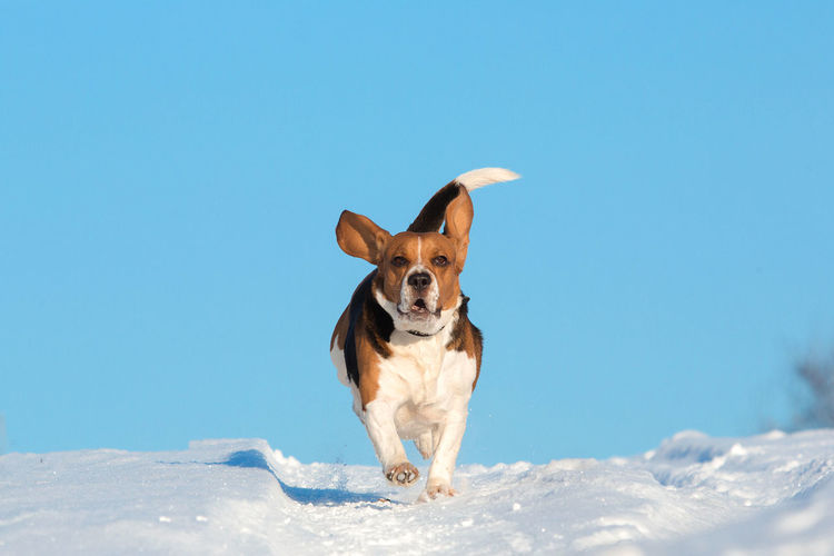 Dog looking away on snow against blue sky