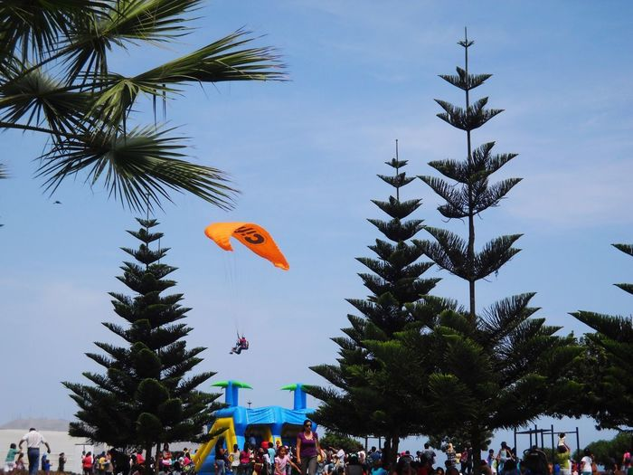 Tree Large Group Of People Sky Day Real People Palm Tree Clear Sky Nature Parachute Parachuting