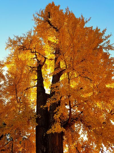 Perspectives On Nature Outdoors Nature Full Frame Tree Luce Day Beauty In Nature My Point Of View Autumn My Life - Just Now Firenze Colori Dell'autunno Autunno Nella Mia Città Autumn🍁🍁🍁 Tree Autunn Colours Passeggiandoalparco Illuminated Autunno🍁🍁🍁 Yellow Color My Journey  Mattina Presto Giallo My Journey