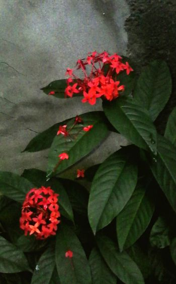 Flowers Petal Freshness Nature Fragility Hermosa Flor