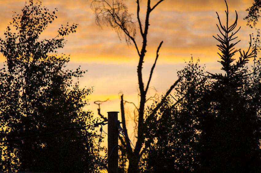 Beauty In Nature Day Growth Nature No People Outdoors Plant Scenics Silhouette Sky Sunset Tranquility Tree