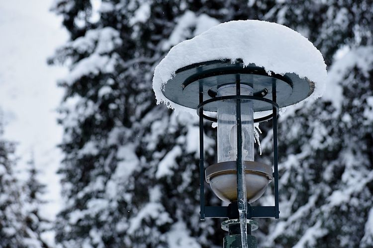 Snow on lamp post Tree Low Angle View Plant No People Nature Day Lighting Equipment Street Light Outdoors Winter Metal Cold Temperature Snow Street Selective Focus Branch Design