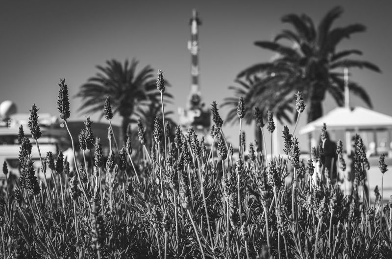 Palm trees and plants against sky