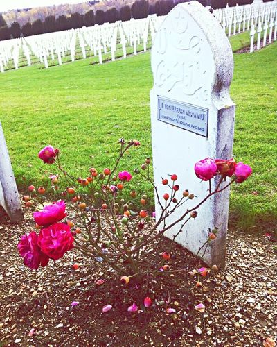 Verdun 👽 First Eyeem Photo
