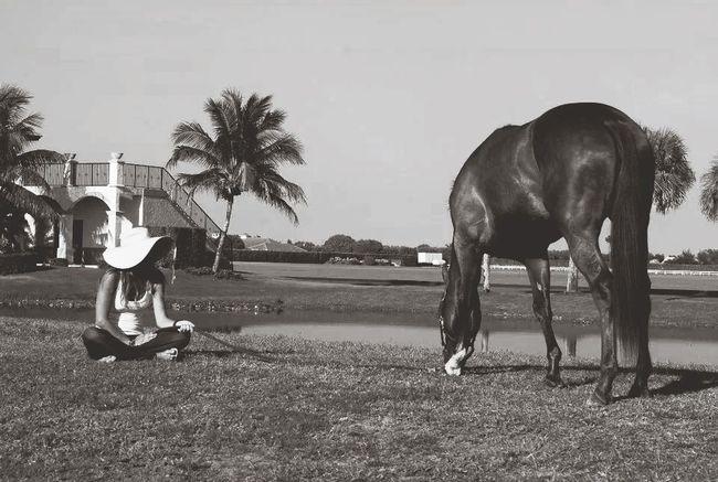 Model Horse Taking Photos Enjoying Life
