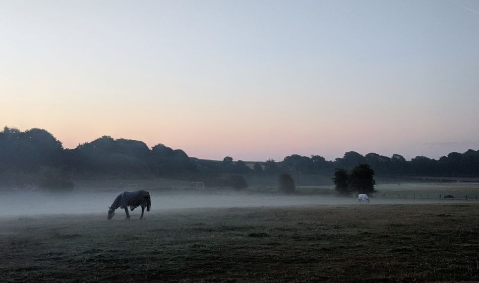 Foggy Morning Sunrise Misty Sunrise Tree American Bison Oil Pump Mountain Horse Grazing Pony Pasture Paddock