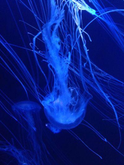Jellyfish Fish Sea Life Sea Creatures Deep Sea Creatures Deep Sea Brightly Coloured Strange Creatures Amazing Life Sting