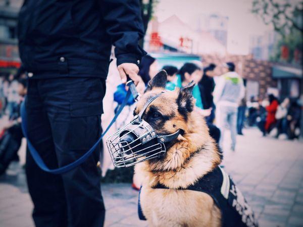 Wu... Doggy Love Dog Animal Love Cute♡