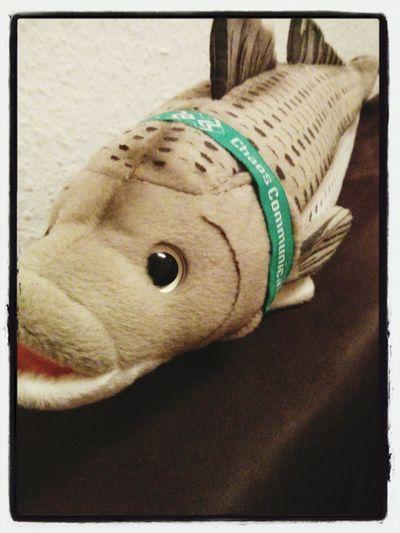 Seebarsch Fish 30C3
