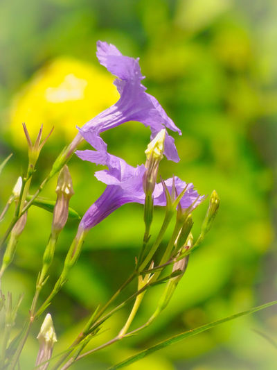 Wednesday Morning Flower Head Flower Uncultivated Purple Petal Springtime Close-up Plant