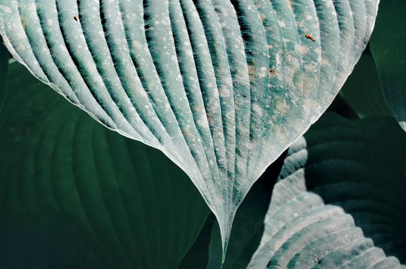 Green Color Leaves UnderSea Leaf Close-up Petal Flower Head