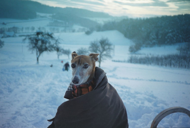 Analogue Photography Austria Coat Cold Temperature Dog Greyhound Landscape Nature Outdoors Pets Portrait Puppy Season  Snow Warm Clothing Winter