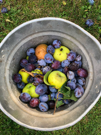 High angle view of fruits in container on field