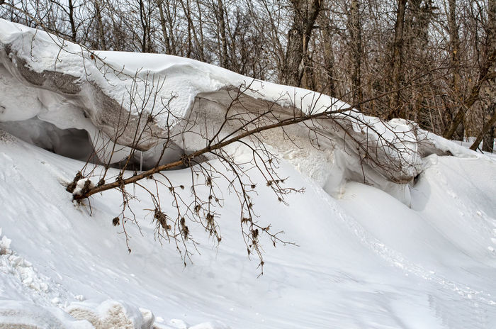 Snow bank in nature. EyeEmNewHere Snow Bank Winter Trees Landscape Cold Temperature Snow White Color Bare Tree Tranquility Cold Outdoors Branch