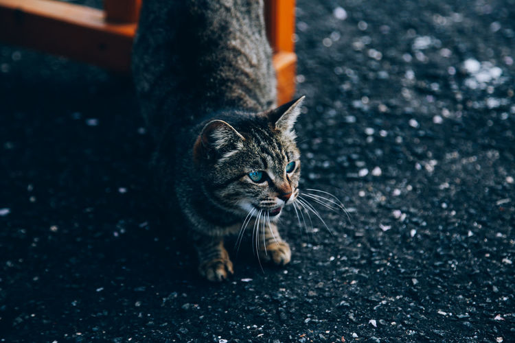 // you've been poisoned // Angry Animals In The Wild Cats Of EyeEm EyeEm EyeEm Best Shots A Action Action Shot  Animal Themes Cat Close-up Day Domestic Animals Domestic Cat Eye Feline Mammal Nature No People One Animal Outdoors Pets Shootermag Shootermag_japan