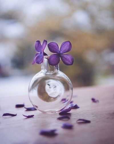 Flowering Plant Flower Plant Nature Close-up Purple Freshness Vulnerability  Fragility No People Still Life Table Art And Craft Focus On Foreground Indoors  Beauty In Nature Vase Decoration Day
