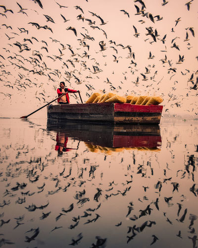 Man on boat in lake against sky during sunrise and surrounded by seagulls, yamuna ghat, delhi, india