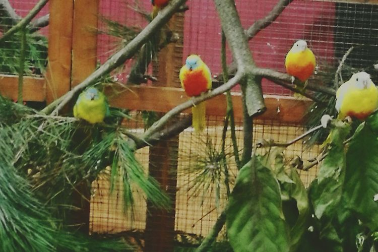 Bird Animal Themes Nature Bird Show Germany Bird Show Vogel Vogelschau