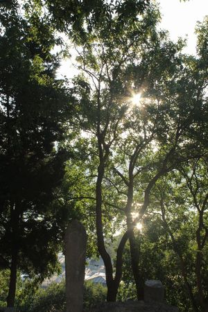Tree Sunbeam Sunlight Lens Flare Back Lit Outdoors Nature Sun Day Growth No People Forest Beauty In Nature Sky Sunset Silhouettes Canon 1300d EyeEm EyeEm Gallery Eyeemphotography Eyubsultancamii Retaining Wall