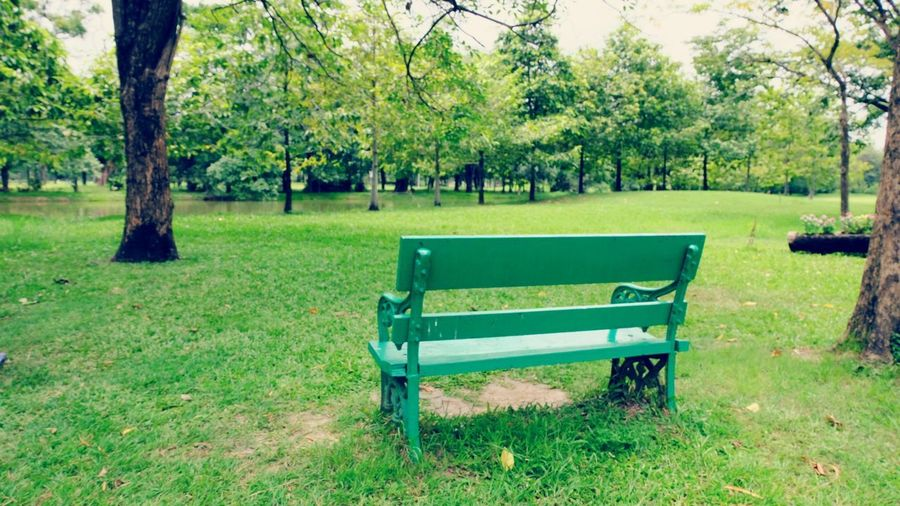 Lonley Tree Seat Relaxation Grass Sky Green Color Landscape Park Bench Bench Park Garden Empty