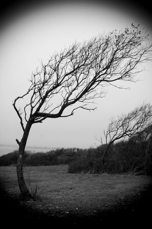 Beavertail State Park, located in Jamestown, Rhode Island 2009 Alone Beavertail State Park Oddities Rhode Island Swept Abandoned Bare Tree Beauty In Nature Black Black And White Branch Dramatic Dramatic Landscape Isolated Landscape Lone Mutation Nature Outdoors Uniqueness Wind