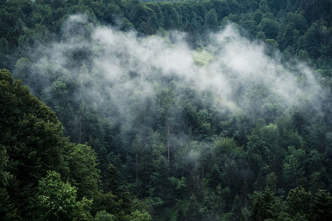 EyeEm Best Shots EyeEm Nature Lover Beauty In Nature Day Eye4photography  Fog Forest Forest Photography Green Color Growth High Angle View Landscape Lush Foliage Mountain Nature No People Outdoors Scenics Tranquil Scene Tranquility Tree Wald