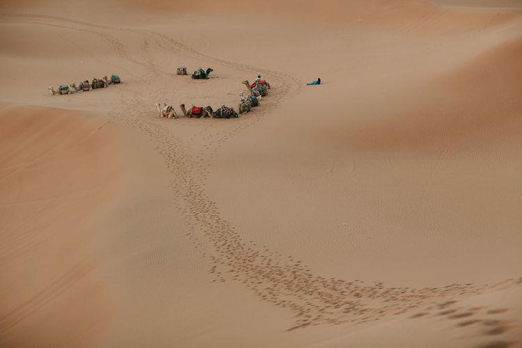 Caravan at sahara desert