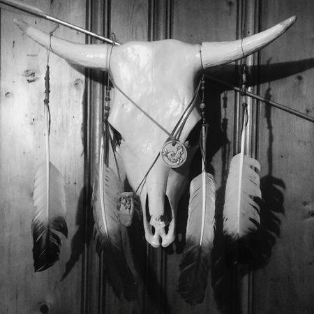 No People Skullhead Skull Skulls 💀 Skull Art