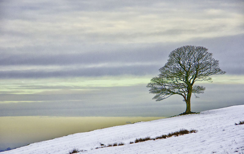 Roaches Shades Silhouette Skyline Staffordshire Beauty In Nature Cold Temperature Day Landscape Layered Sky Lone Nature No People Outdoors Pastel Colors Scenics Sky Snow Tranquil Scene Tranquility Tree Tree On Skyline Uk Weather Winter
