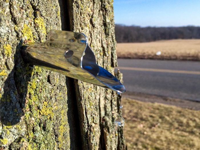 Maple Tree Maplesyrup Dripping Tree Tapping Tap Syrup Sap Focus On Foreground Day No People Wood - Material Outdoors
