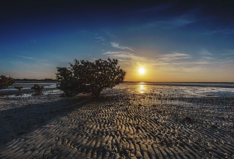 Seabed sunset Sky Water Sea Beauty In Nature Scenics - Nature Beach Land Tranquil Scene Tranquility Sunset Nature Horizon Over Water Horizon No People Cloud - Sky Idyllic Sand Tree Non-urban Scene Outdoors