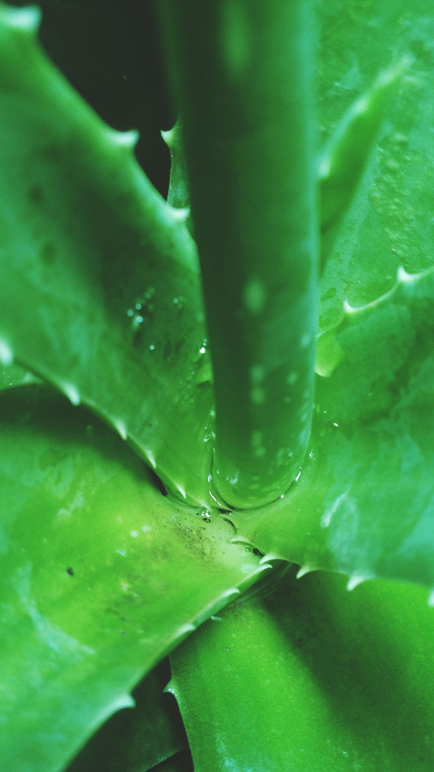 green color, water, nature, drop, close-up, growth, no people, beauty in nature, fragility, outdoors, day, freshness