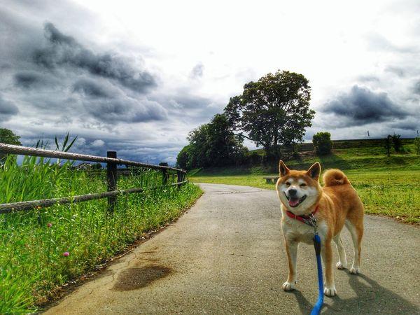 partner🌟🐶🐶🌟Lan EyeEm Gallery Pets Tree Storm Cloud Dog Portrait Sky Grass Cloud - Sky