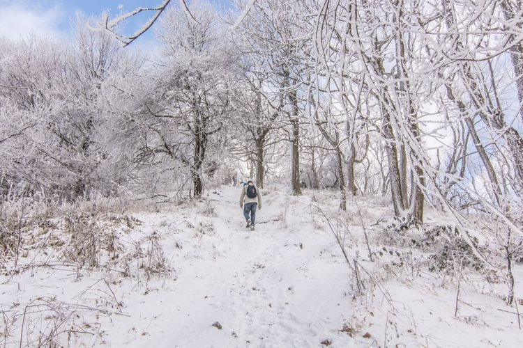 Winter Snow Cold Temperature Bare Tree Lifestyles Real People Weather Tree Nature Leisure Activity Outdoors Day Beauty In Nature Branch Warm Clothing One Person Hungary Weather Kéktúra Borzsony