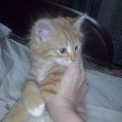 тимон кошастик мои_коты мойлюбимыйпитомец мой_любимый_кот любителямкошек catlover cat cats catsagram my_lovely_cat