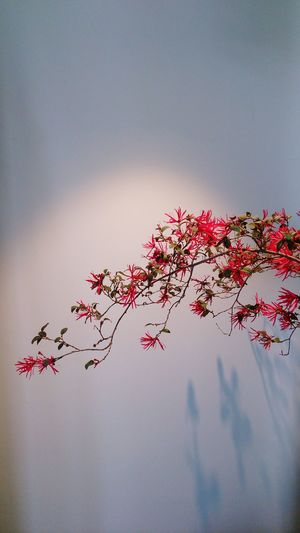 Plant Plant Life Bird Tree Cultures Flying Sky Branch Flower Tree Pink Growing Blooming