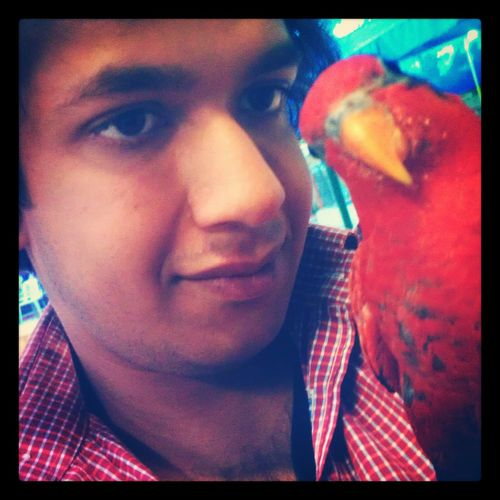Cute Pets Parrot Lovers Red Lory Lorikeets Playing With The Animals EyeEm Animal Lover
