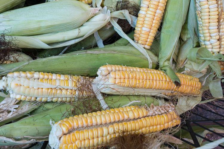 High angle view of corn