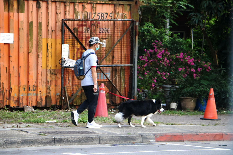 Side view of dog standing on footpath