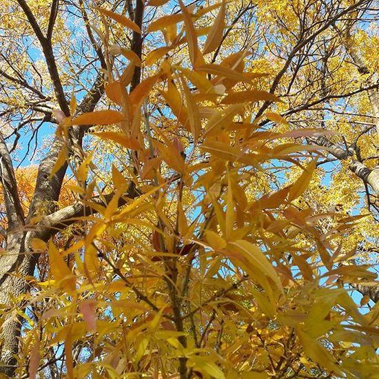 çanakkale Sonbahar Sarıyapraklar Yaprakdokumu