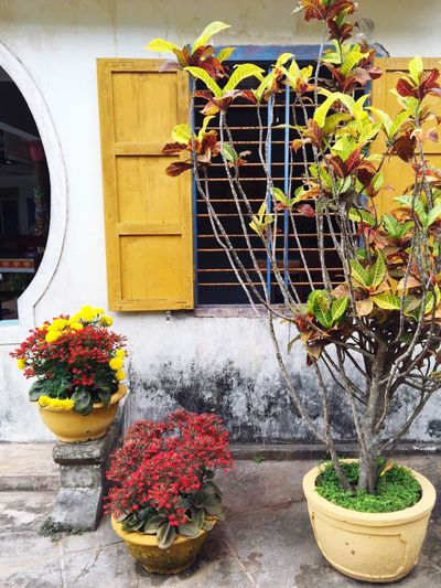 Beautiful colors Vietnam House Colorful Orange Red Yellow Plants Flowers Buddhist