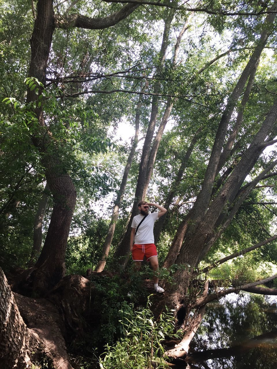 LOW ANGLE VIEW OF WOMAN STANDING BY TREE IN FOREST
