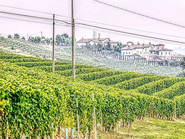 Italy🇮🇹 Barolo Wineyards Growth Rural Scene Fence Field Green Color Agriculture Crop  In A Row Farm Nature Day Cultivated Land Power Line  Freshness Tranquility Cultivated Blue Sky Green Outdoors Wine Tasting Wine Glass Wine Time