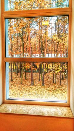 No People Window Mobile Phone Autumn Autumn Colors Oneplus X Oneplusxphotography Inside Trees Leaves Leaves 🍁