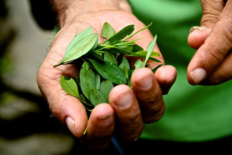 Midsection Of Person Holding Leaves