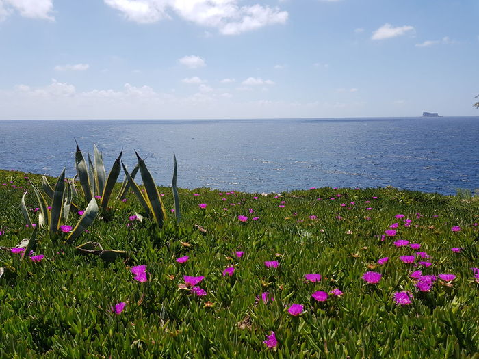 Malta in bloom:) Cactus Flower Malta Mediterranean  No Edit/no Filter Holiday Flower Flower Head Water Sea Beach Pink Color Summer Sky Horizon Over Water Grass Blooming